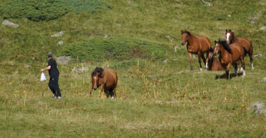 13082016_cavalli impazziti