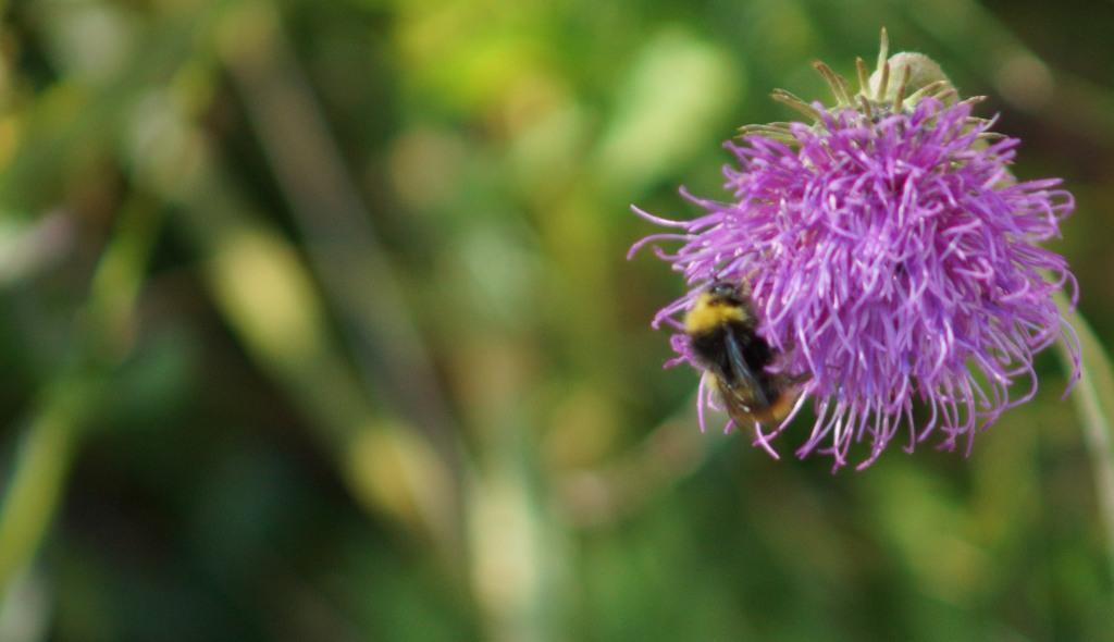 13082016_fiore con vespa